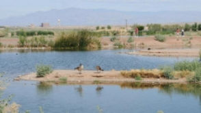 Things to do in Henderson NV - Bird Viewing